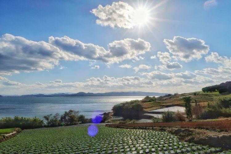 レタス畑 リフレクション レタス トレッキング ウォーキング 畑 太陽 ソラ 空 Sky Blue Lettuce Plant Lettuce Field Sun Mountains Reflection Growth Cloud - Sky Nature Green Color EyeEmNewHere Nature Beauty In Nature Sunlight