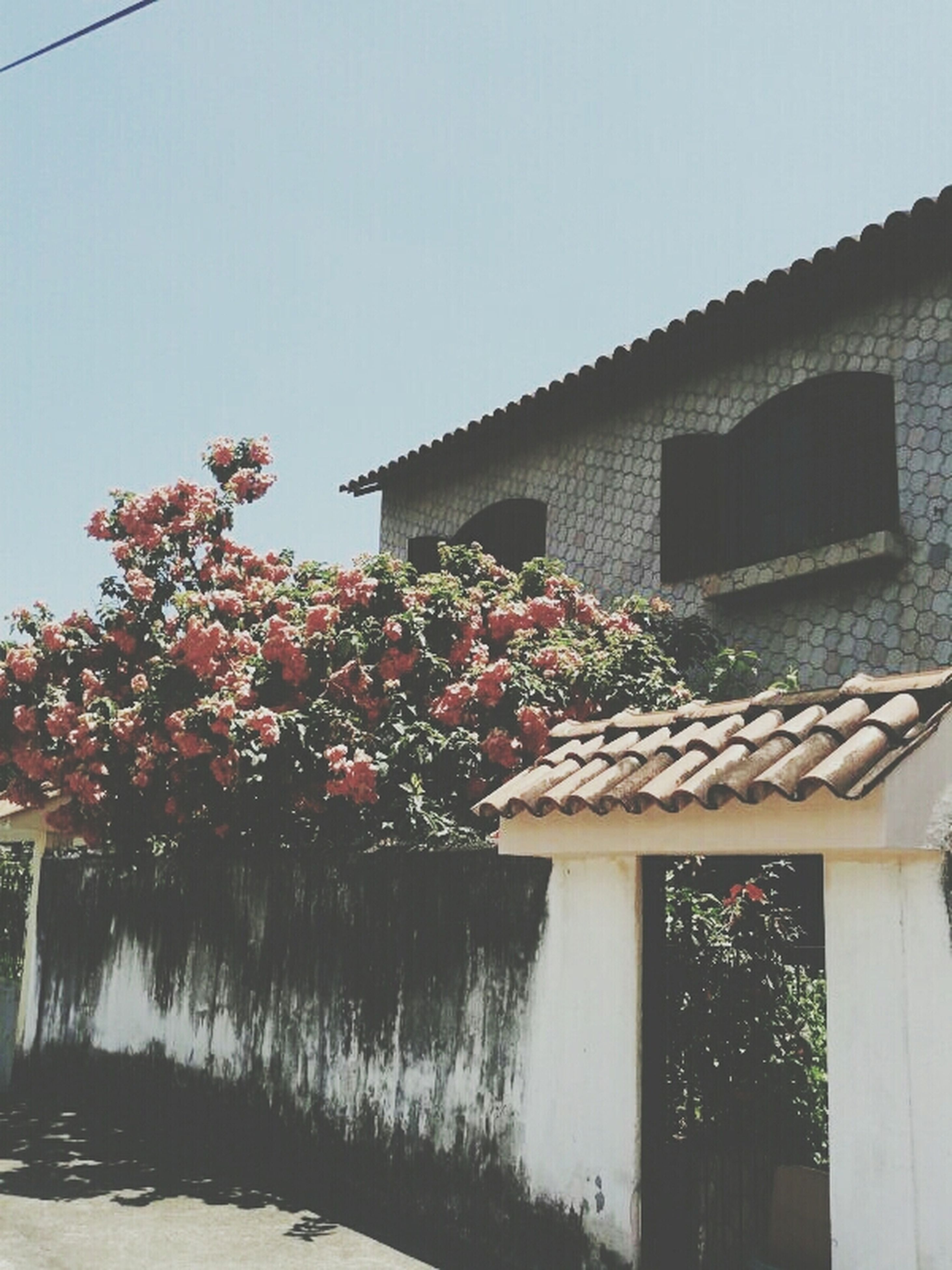 built structure, architecture, building exterior, clear sky, house, flower, growth, tree, plant, potted plant, sky, residential structure, nature, day, freshness, low angle view, outdoors, residential building, no people, sunlight