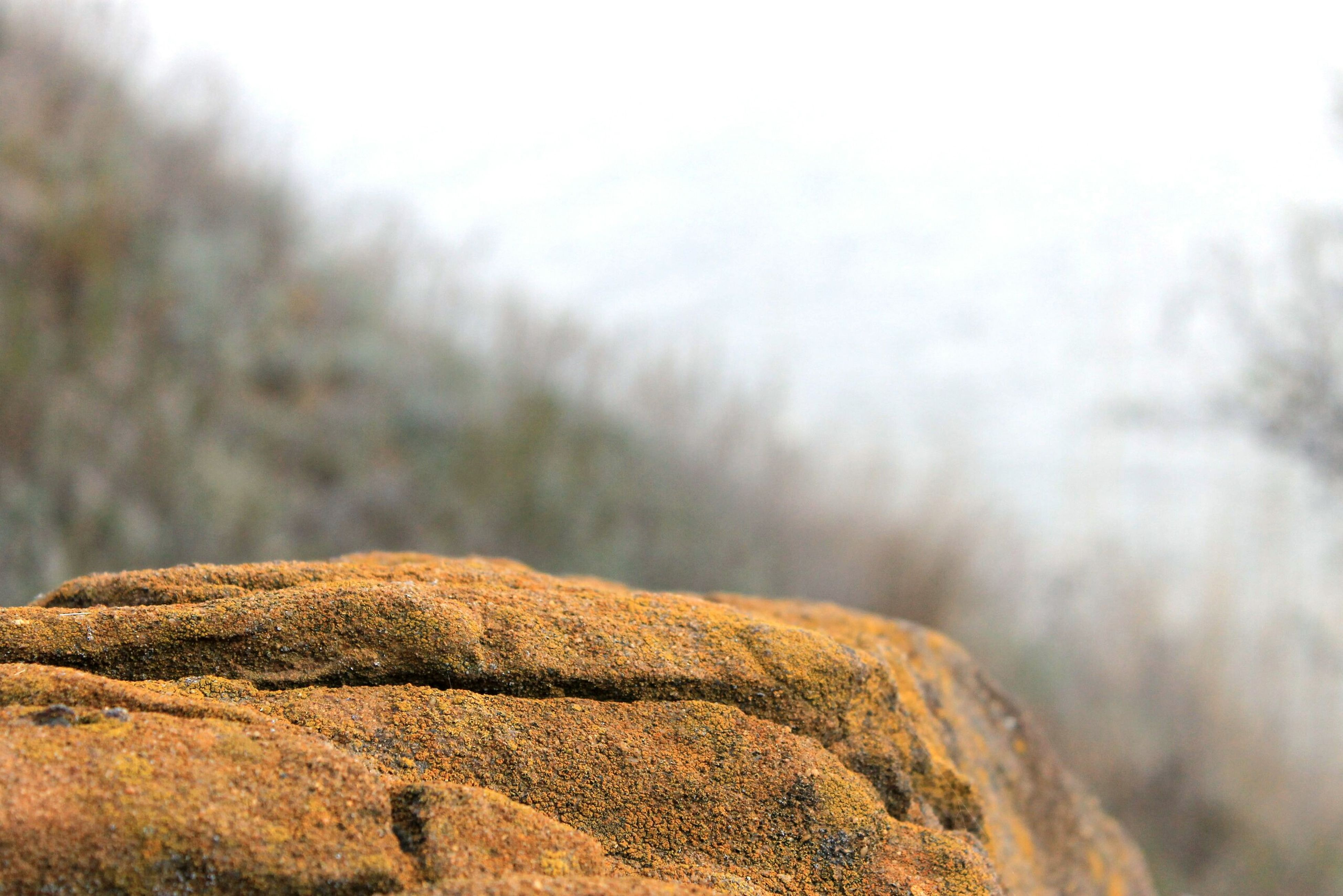 rock - object, focus on foreground, nature, tranquility, tranquil scene, rock, scenics, beauty in nature, rock formation, landscape, close-up, textured, rough, selective focus, non-urban scene, outdoors, day, sky, no people, natural pattern