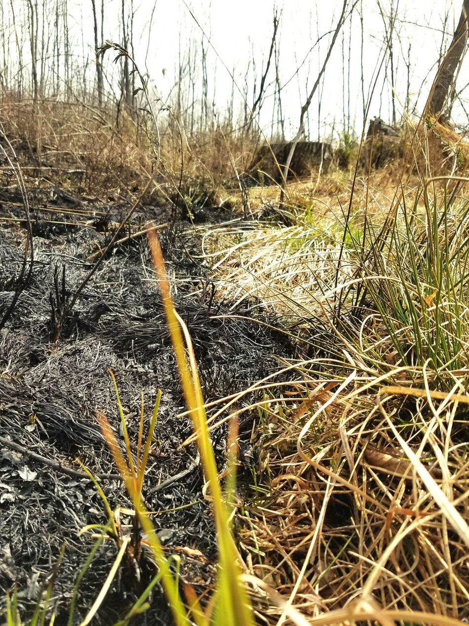 Wildfire. Life and death. Black lines. Wildfire Black Line Life Death Charcoal Seasonal Grasses Fireseason Fire