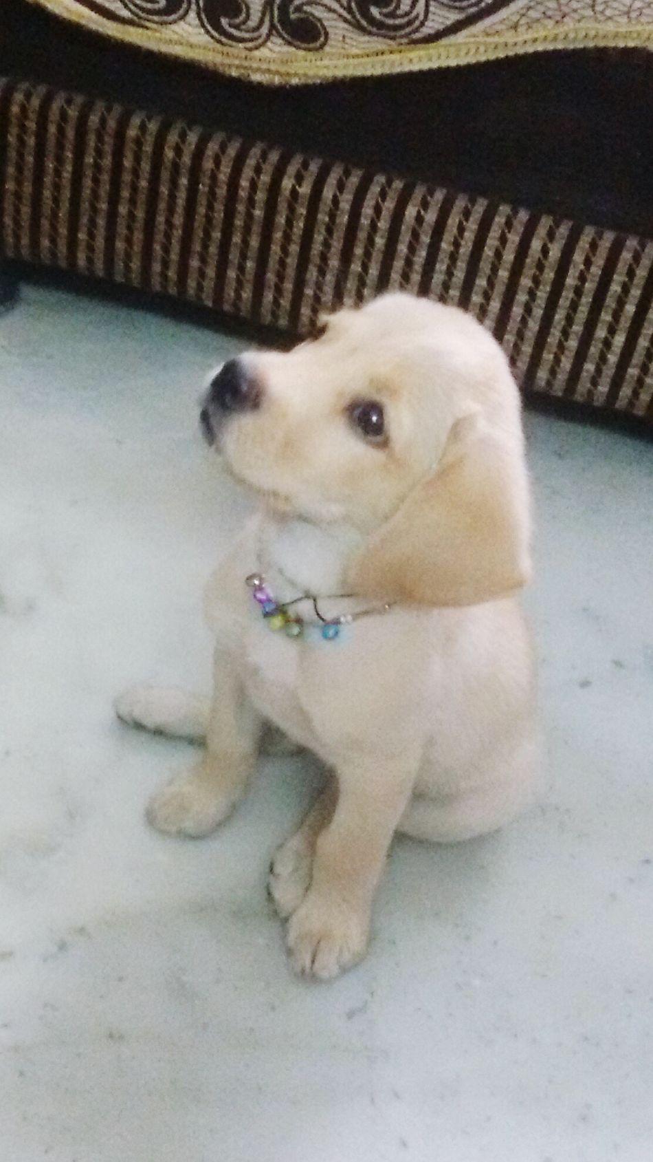 Such a cutie Cheenu Pup Cute Pets