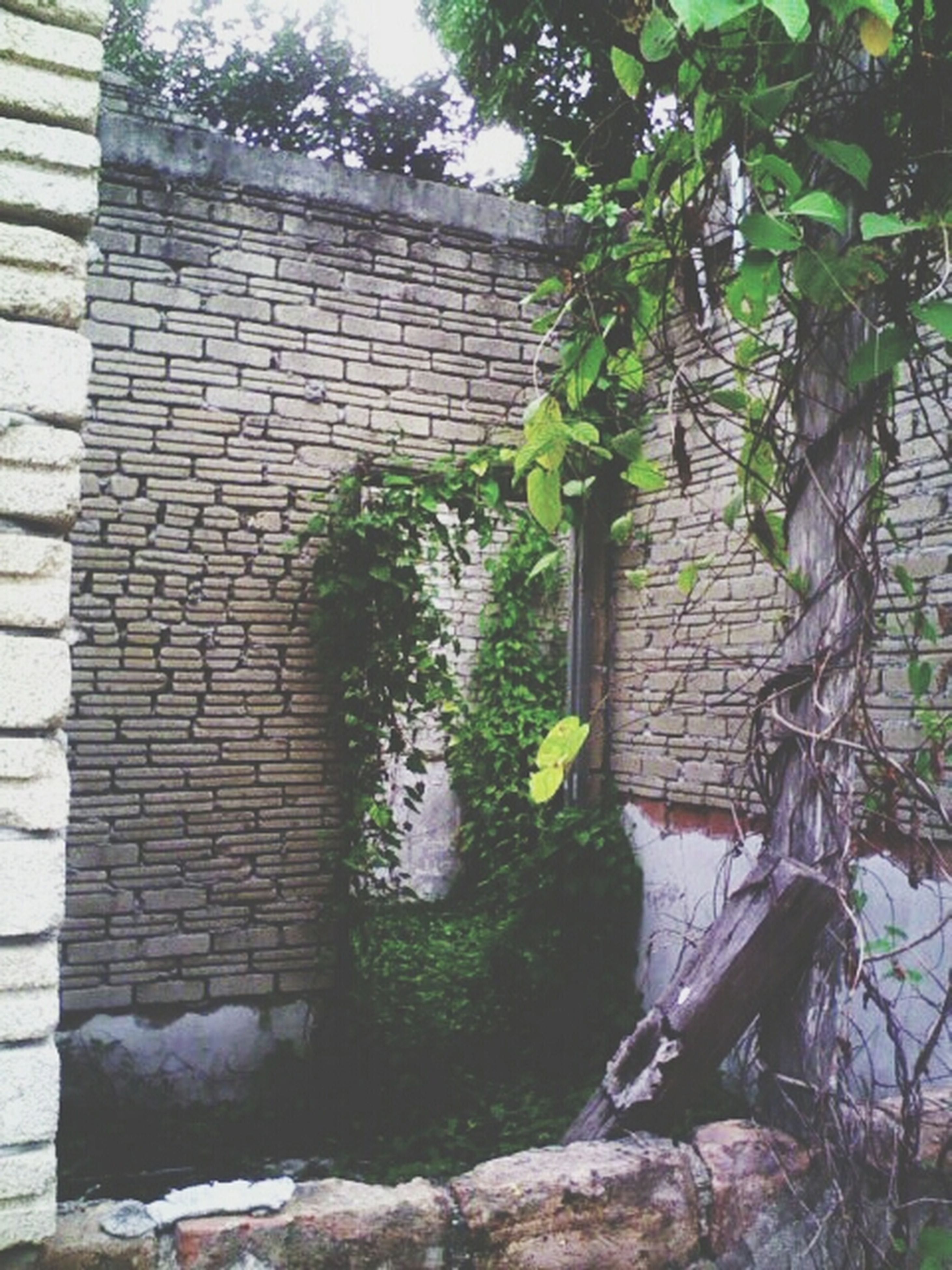 building exterior, architecture, built structure, house, brick wall, wall - building feature, plant, window, tree, residential structure, wall, growth, residential building, day, front or back yard, building, outdoors, door, stone wall, no people