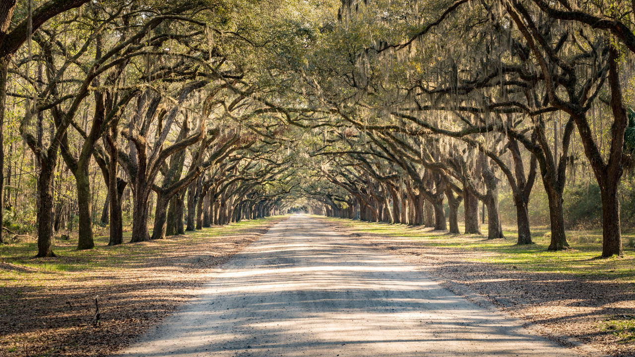 Beauty In Nature Day Diminishing Perspective Driveway Forest Forest Gump Landscape Live Oaks Nature No People Outdoors Rural Scene Savannah Scenics Straight The Way Forward Tree Wormsloe