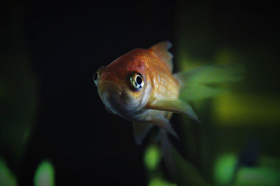 Beautiful stock photos of fish, Animal Themes, Animals In Captivity, Animals In The Wild, Australia