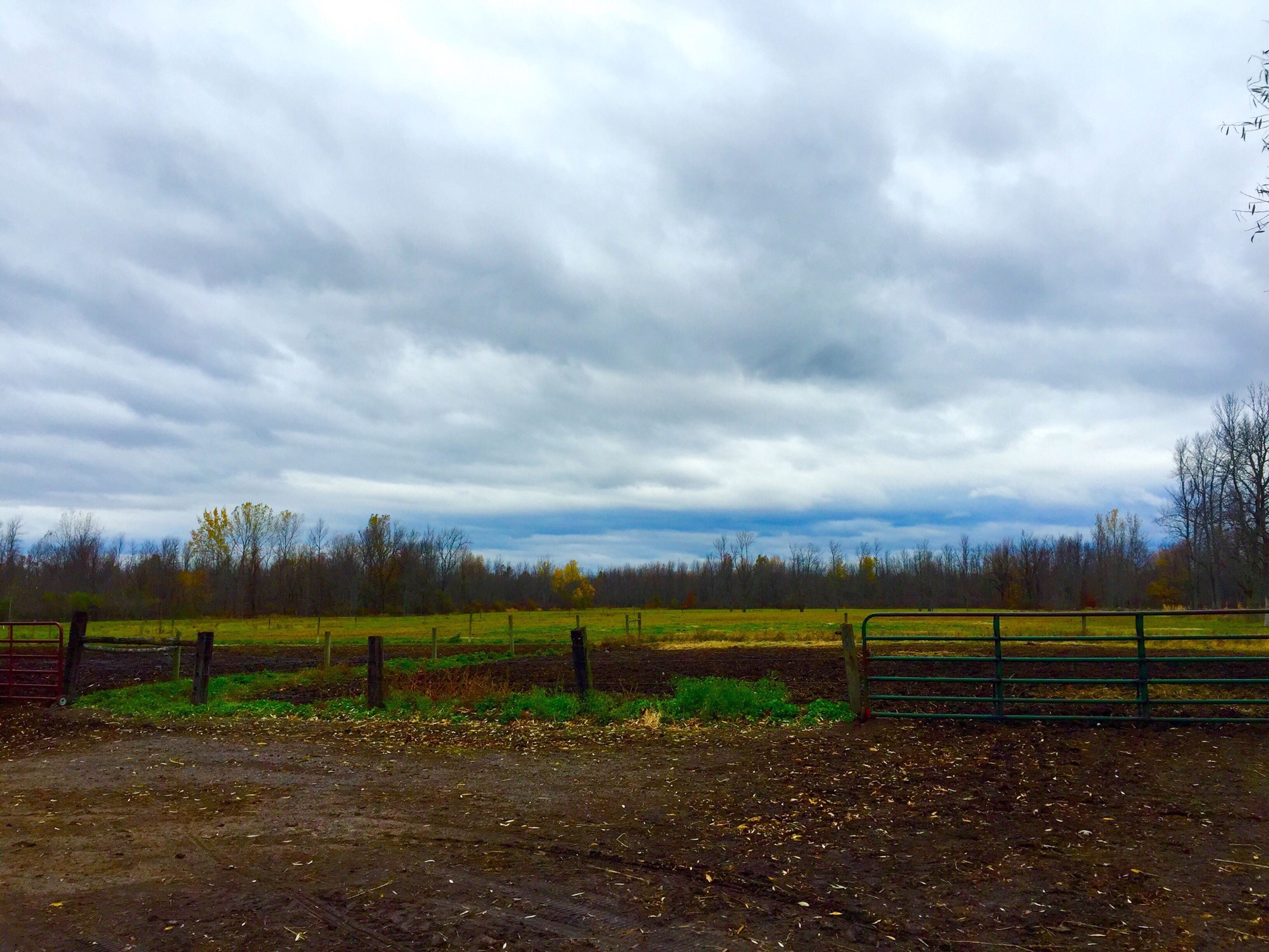 sky, cloud - sky, field, landscape, cloudy, tranquility, fence, tranquil scene, grass, scenics, nature, rural scene, cloud, beauty in nature, tree, agriculture, overcast, grassy, farm, weather