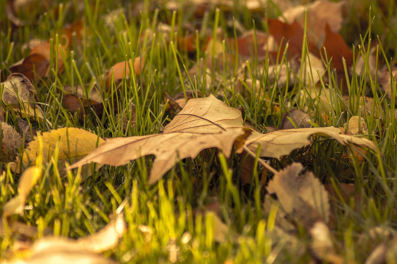leaf, nature, grass, no people, outdoors, day, plant, close-up, fragility, animal themes