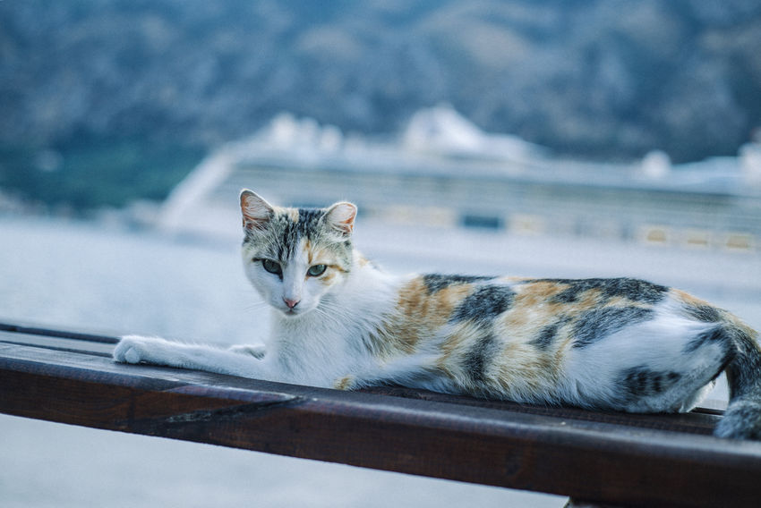 Cats Of EyeEm Animal Themes Cat Close-up Day Domestic Animals Domestic Cat Europe Feline Focus On Foreground Montenegro No People One Animal Outdoors Pets Portrait Seaside