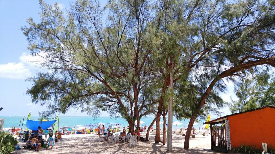 Tree Sea Sky Nature Beach Sunlight Outdoors Day Beauty In Nature Water Tranquility Vacations Growth Real People Large Group Of People Scenics People
