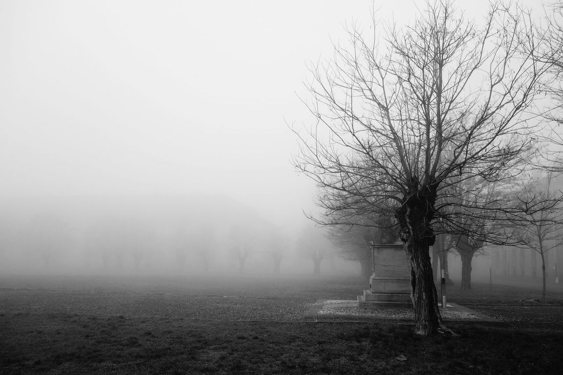 Tree Cittadella Alessandria Foggy Morning Fog Foggy Day Foggyday