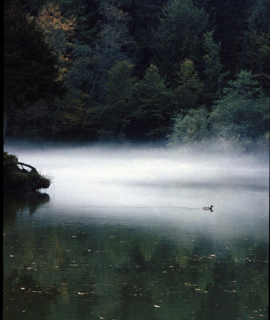 Arboretum Duck Fog Haze Lac Switzerland