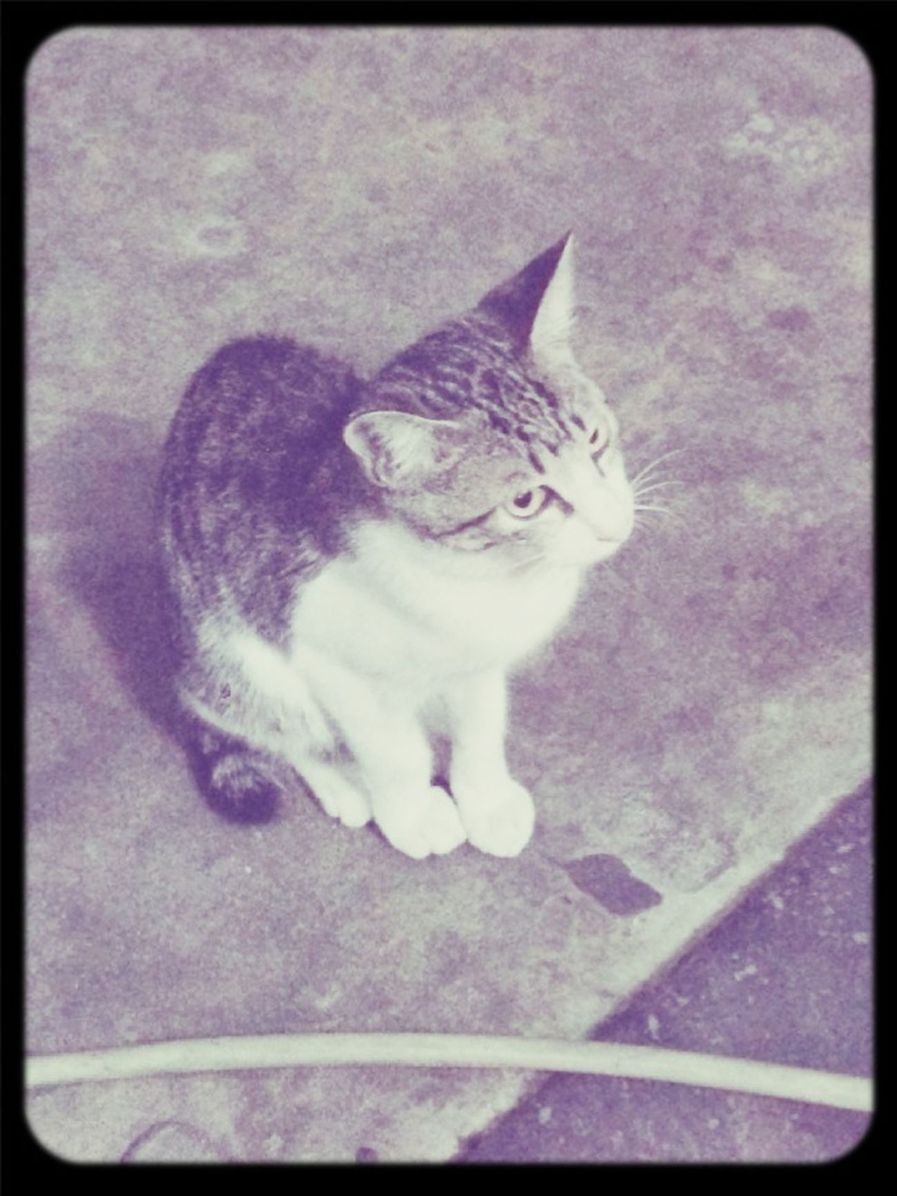 好可愛的喵之人多到爆表 Noodles Kaohsiung Food Cat