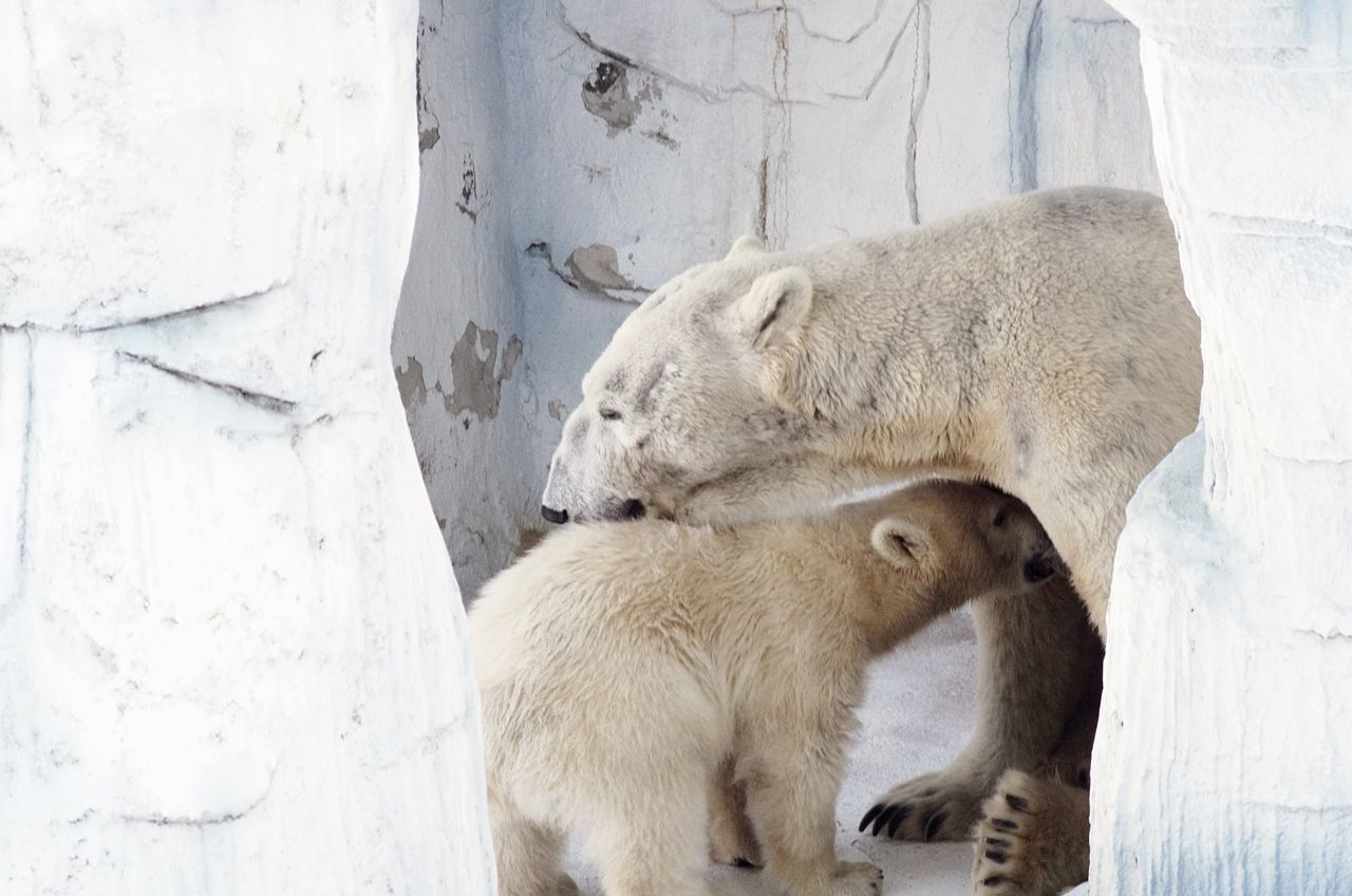 Beautiful stock photos of mother's day, Animal Family, Animal Themes, Animals In The Wild, Bear
