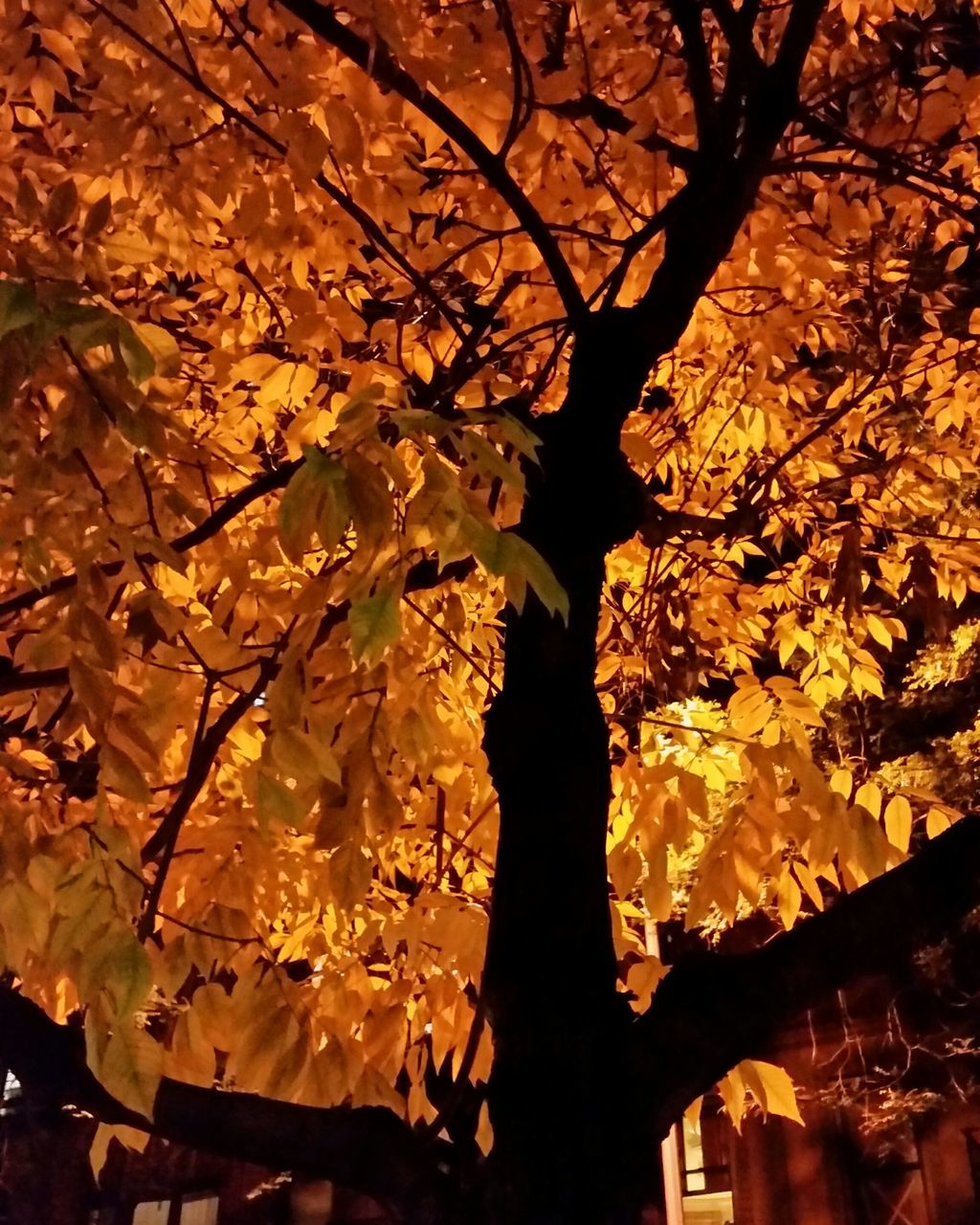 nature, tree, beauty in nature, no people, branch, growth, leaf, autumn, outdoors, night, close-up, flower, fragility