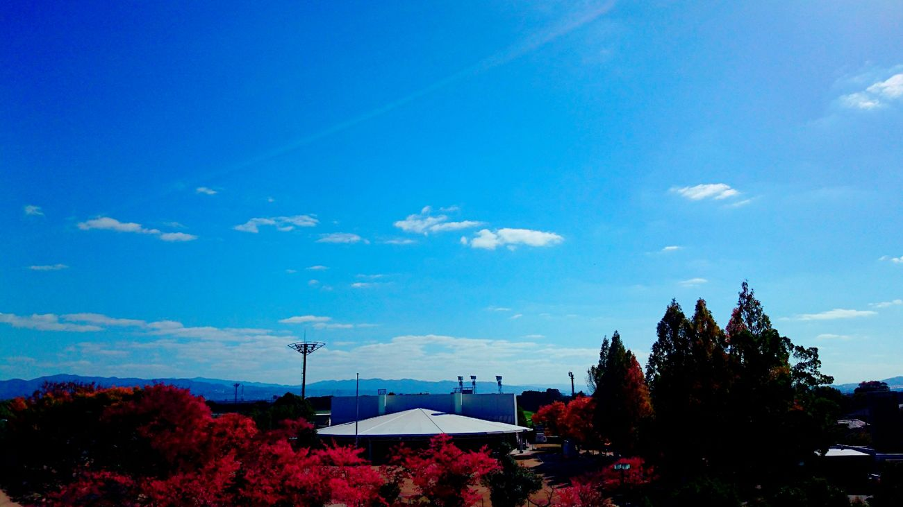 Sky Blue Sky And Trees Sky_collection November 2016 Kyoto, Japan Beauty In Nature Nature No People Relaxing Time I Love Sky  Colors Of Nature EyeEm Gallery EyeEm Best Shots Favorite My World Love To Take Photos ❤ Enjoying Life Have A Great Day Good Night And Sweet Dreams ❤️☁️😴