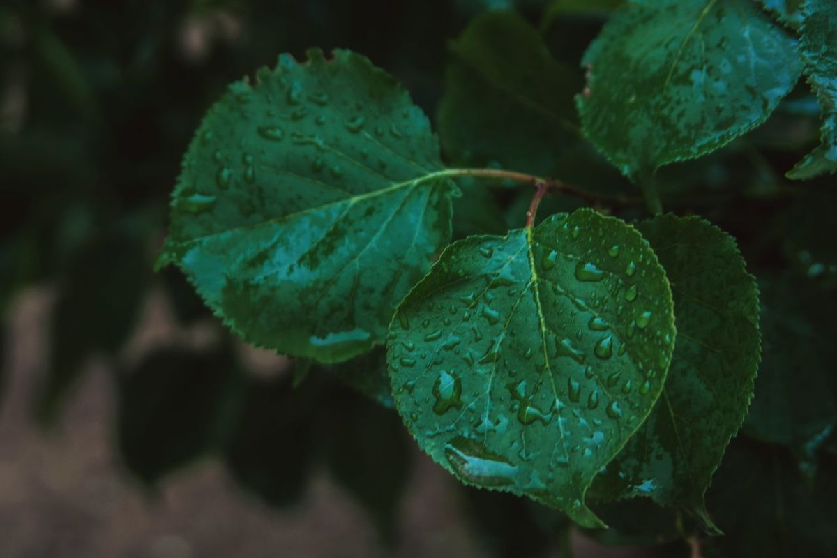 Ghassen ben taher ©. 2k16 Beauty In Nature Canon Canon_photos Canonphotography Close-up Day Freshness Green Color Growth Healthy Eating Leaf Nature No People Outdoors Plant Railing Rain Rainy Days