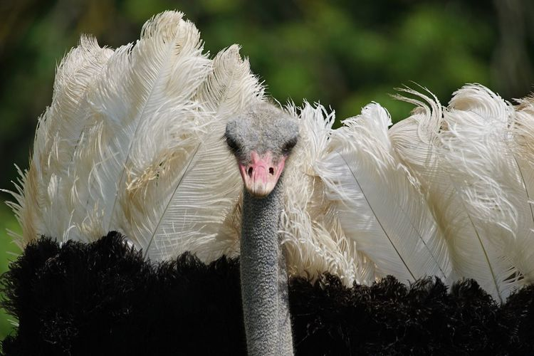 Animal Themes Animals In The Wild Bird Animal Wildlife Nature No People Beak Day Close-up Outdoors Ostrich Mammal Emu Tadaa Community OpenEdit Pet Portraits