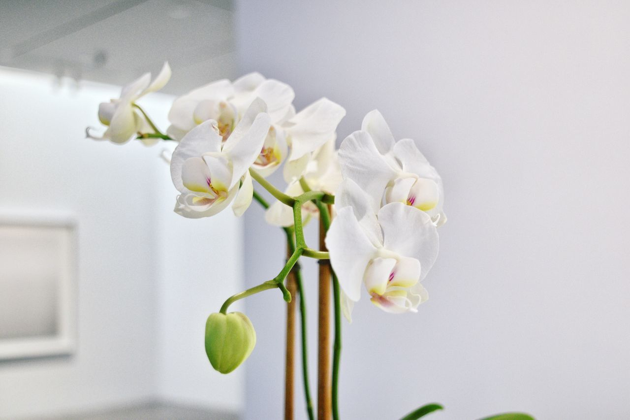 Beautiful stock photos of orchid, Beauty In Nature, Close-Up, Copy Space, Flower
