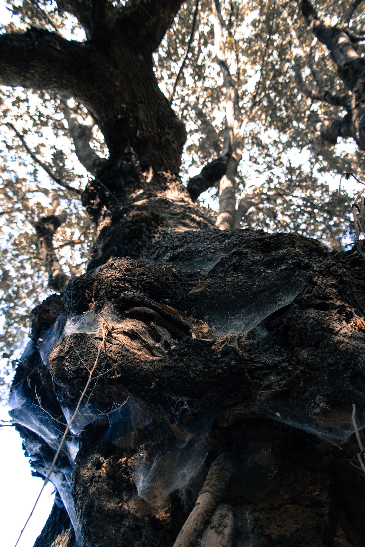 Bark Beauty In Nature Botany Branch Close-up Day Focus On Foreground Fragility Growing Growth Large Low Angle View Nature No People Outdoors Plant Bark Scenics Sky Tall - High Tranquil Scene Tranquility Tree Tree Trunk WoodLand