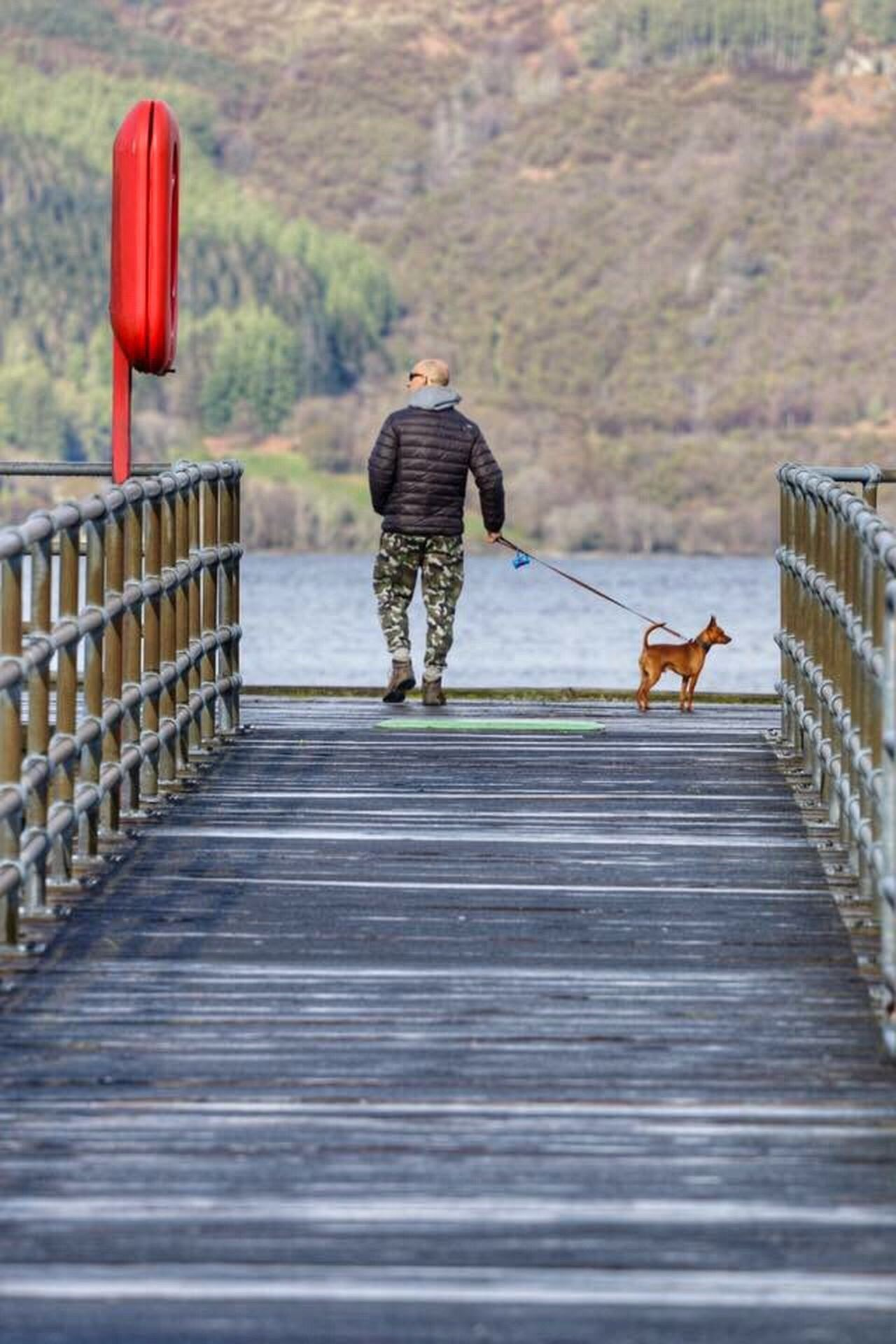 Enjoy The New Normal Full Length Animal Themes Walking One Animal Domestic Animals Day Outdoors Pets People One Person Nature Adult Scotland LochLomond Travel