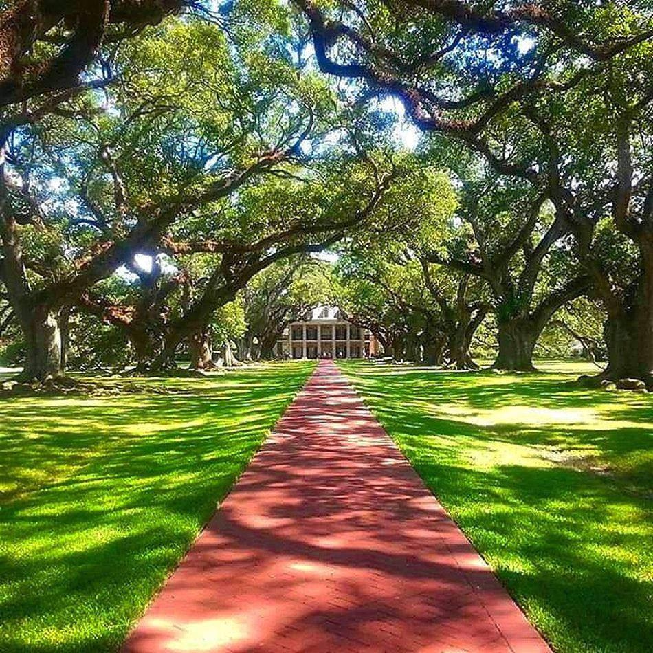 Oak Alley Plantation. Vacherie, Louisiana. Photography Antebellum Amateur