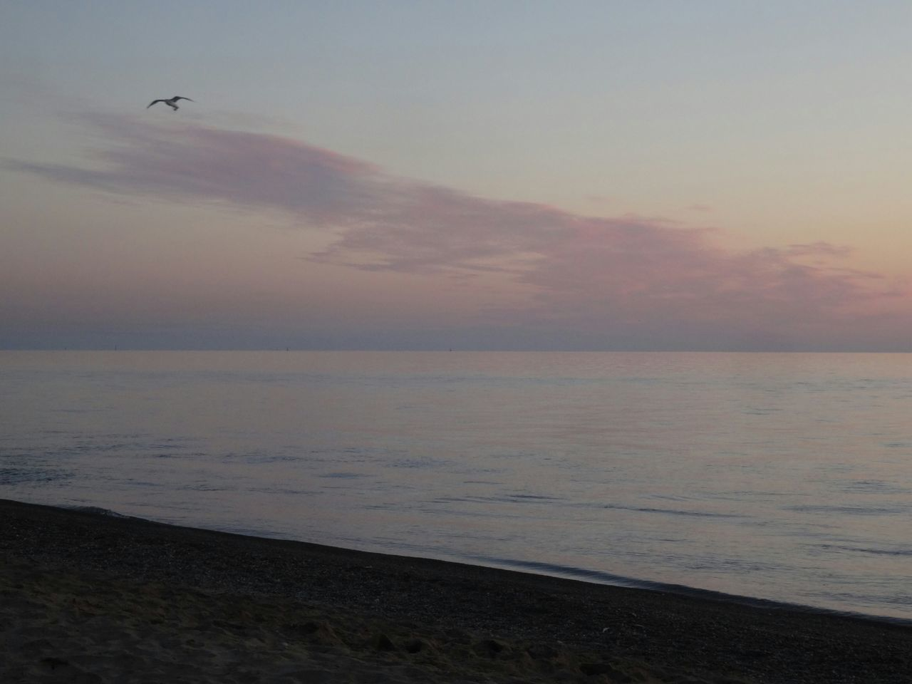 sea, water, beauty in nature, nature, horizon over water, scenics, tranquil scene, bird, flying, beach, sunset, tranquility, outdoors, sky, animal themes, animals in the wild, one animal, no people, idyllic, mid-air, animal wildlife, clear sky, day, spread wings