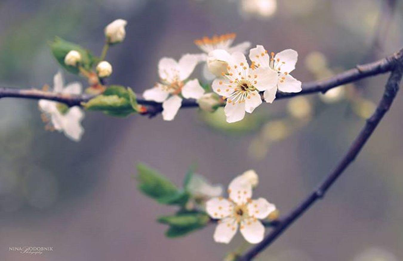 Blossom 🌼 Spring Springmood Springtime Nature_captures Naturephotography Blossom Igslovenia