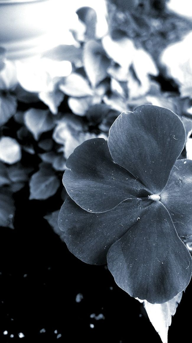 Nature On Your Doorstep Beautiful Flower I Love Nature! I Love Flowers Blackandwhite Photography Flowers In Bloom Black And White Flower Collection Black And White Photography Blackandwhitephotography Black And White Collection  Flower Garden Photography