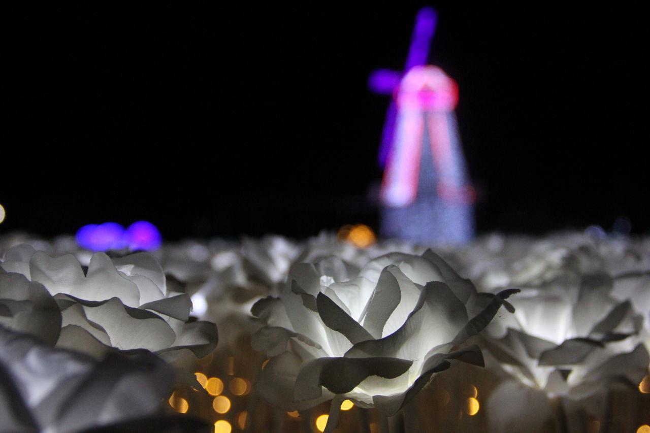 一次艺术灯会 Led Lights  Light Art Light Show Lights Night View 夜景 艺术灯会 花田灯海