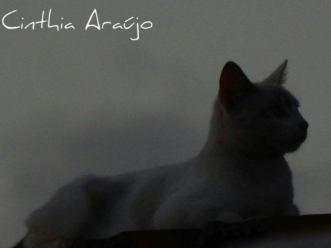 Walking Around Cat♡ Fim De Tarde!!!... ;) Gatos No Telhado