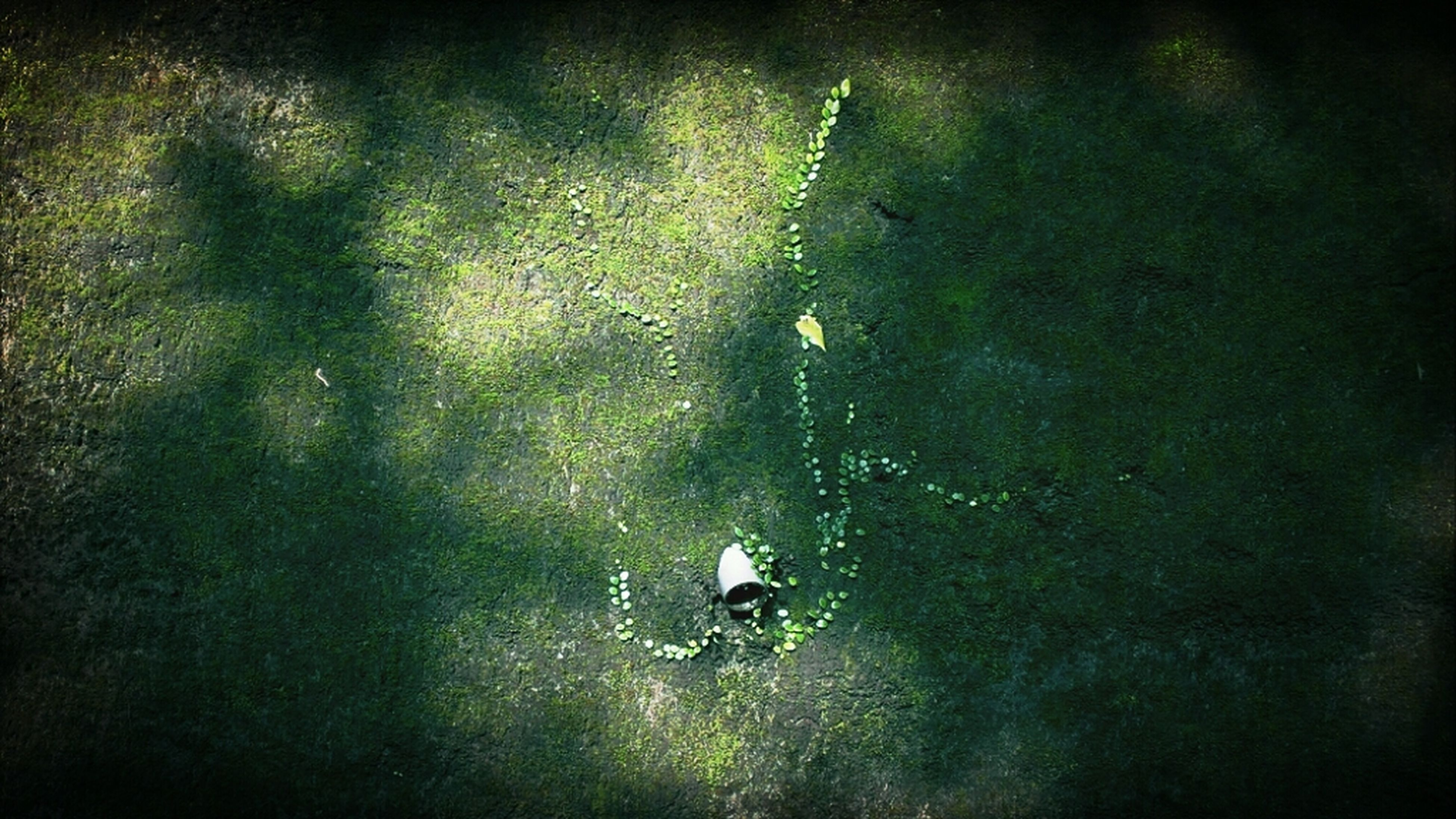 animal themes, high angle view, animals in the wild, wildlife, swimming, water, grass, shadow, nature, bird, sunlight, field, outdoors, lifestyles, tranquility, men, full length, day