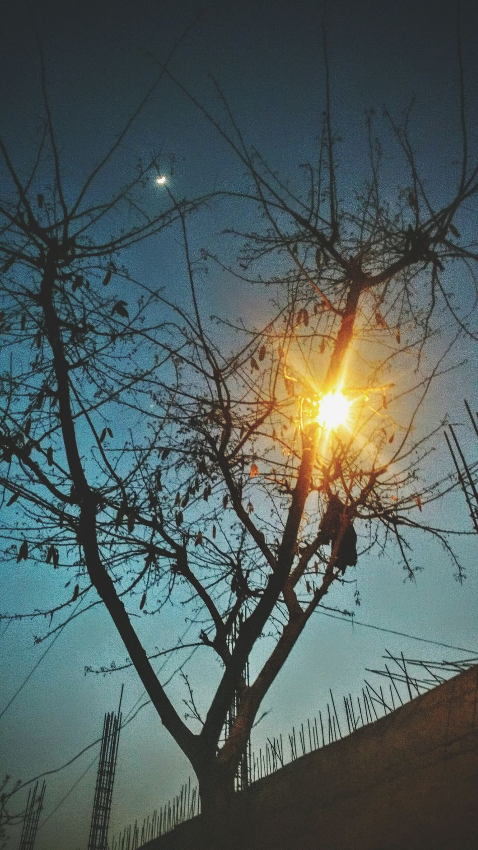 Tree Sun Sunset Silhouette Nature Branch Low Angle View Beauty In Nature Sky Sunlight Tranquility No People Growth Bare Tree Tranquil Scene Outdoors Moon Day Life Is Beautiful Solace First Eyeem Photo