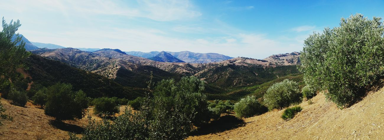 Sky Clouds And Sky Blue Sky Mountains Trees From My Point Of View Enjoying The View Panorama Panoramic Photography Landscape Nature Enjoying Nature EyeEm Nature Lover Enjoying Life Relaxing EyeEm Best Shots Eye4photography  Photo Taking Photos in Taza - Morocco