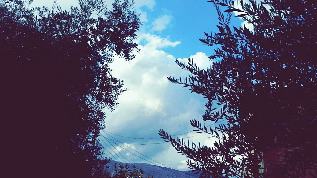 Nature Beauty In Nature Cloud - Sky Tree Autumn Jordan First Eyeem Photo Tumblr My Favorite Color Blue Travel Rain