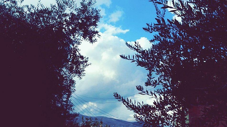 Nature Beauty In Nature Cloud - Sky Tree Autumn Jordan First Eyeem Photo Tumblr My Favorite Color Blue Travel Rain