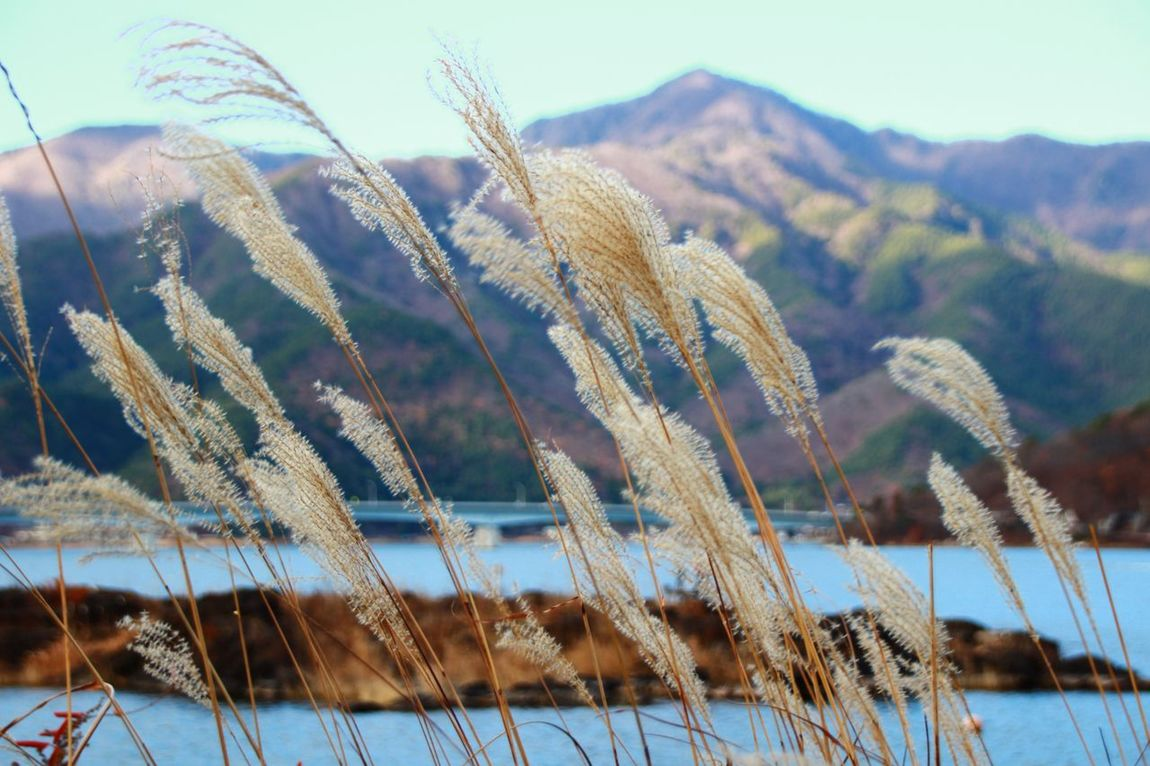 Pampas Grass Japanese Pampas Grass Lake Mountains Nature_collection EyeEm Nature Lover
