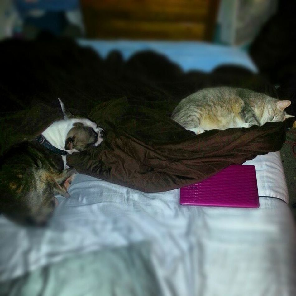Comfy guys? BedHogs SnuggleBuddies Morningnap IGotBedJacked