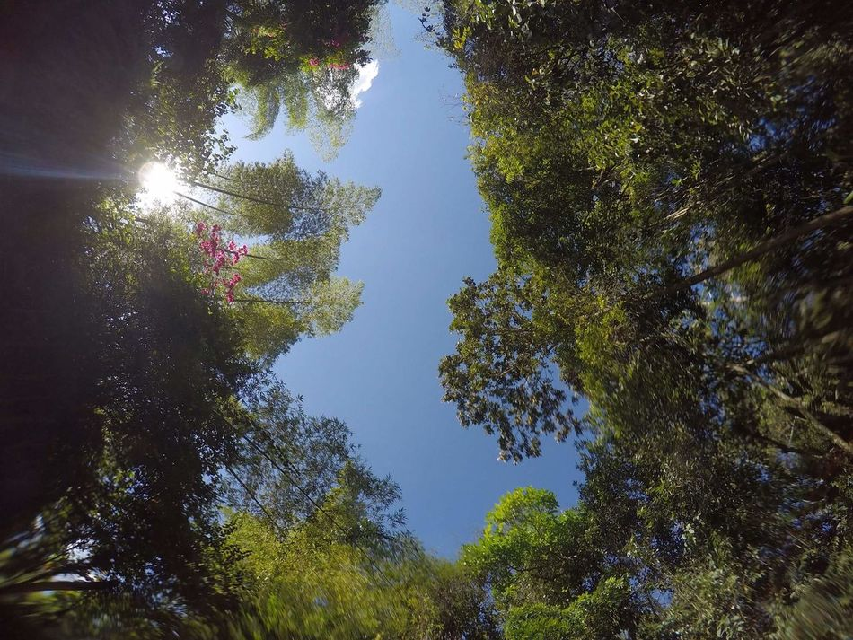 Underwater Nature Tranquil Scene Beauty In Nature Forest GoPrography Goprouniverse Goprophotography Gopro Shots Goprohero4 Gopro Colombia