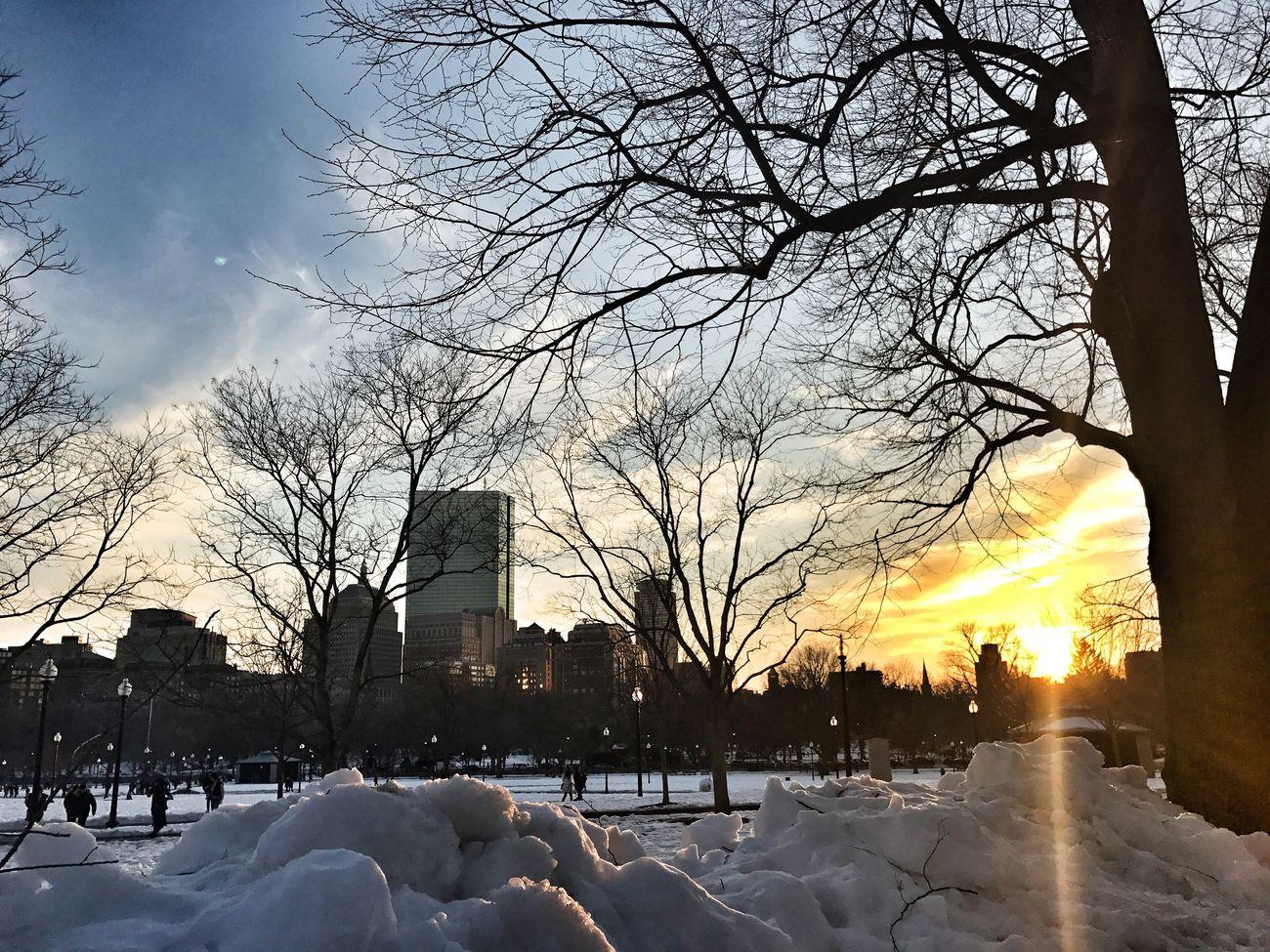 Boston Commons Snowy Sunset Park Winter Trees Winter Sky