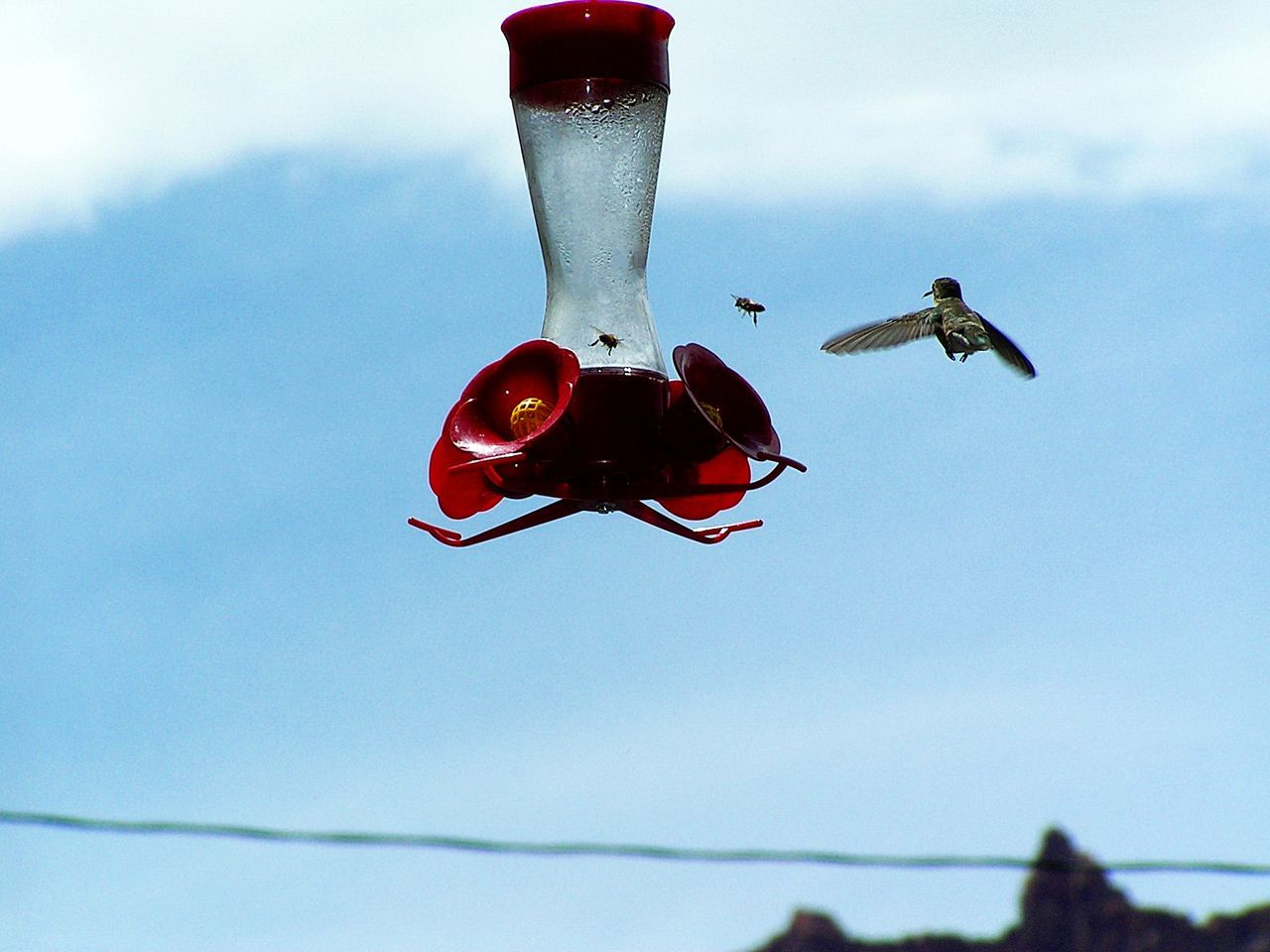 """""""I'm Outta' Here!"""" Animal Themes Animals In The Wild Beautiful Nature Bird Close-up Day EyeEm Gallery EyeEm Nature Lover Flying Hummingbird Hummingbirds Motion Capture Nature No People Outdoors Red Sky Water I'm Outta Here"""