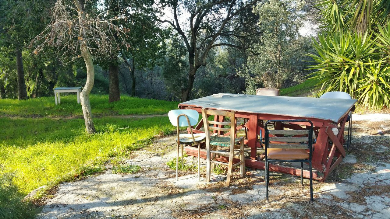 Nature Outdoors No People Wood Tree Day Forest Outdoor_table Afternoontable