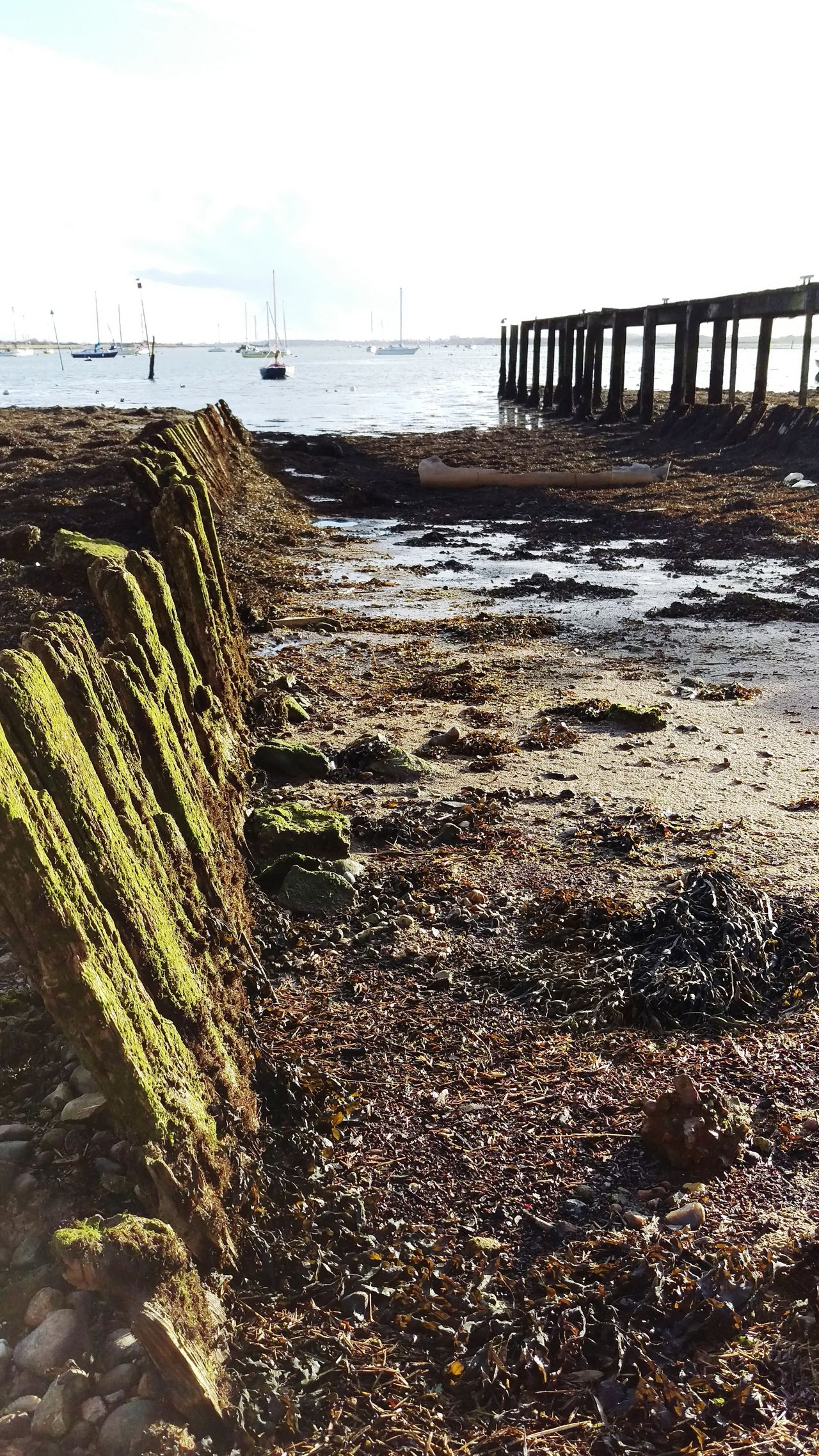 Jetty Low Tide Shore Shoreline Seaweed Exposed Chichester Harbour