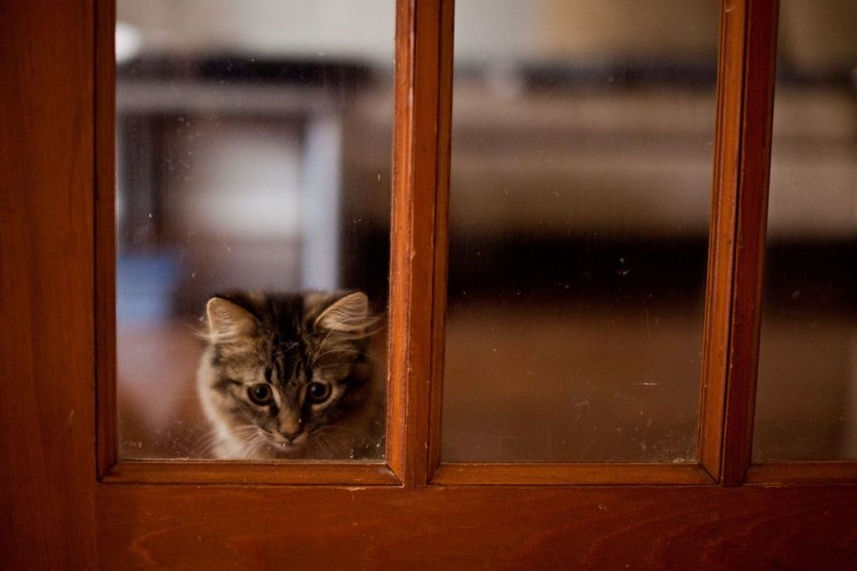 Beautiful stock photos of transparent, Animal Themes, Cat, Closed, Domestic Animals