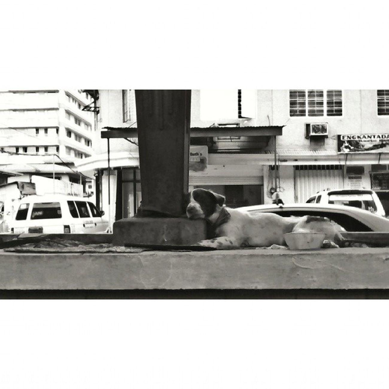 """Center Island Snoozing"" Taftavenue Streetphotography"