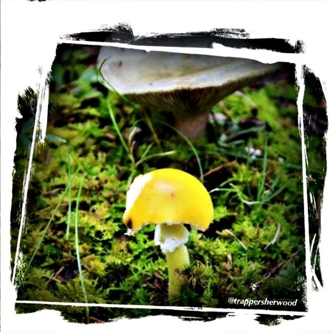 Autumn In The Park Shroomin' Fungus Amungus Nature_collection