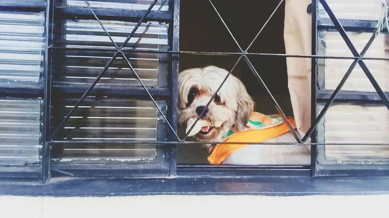 Dog❤ Window So Cute I LOVE DOG Nice Photo Happy Dog Hello World ??