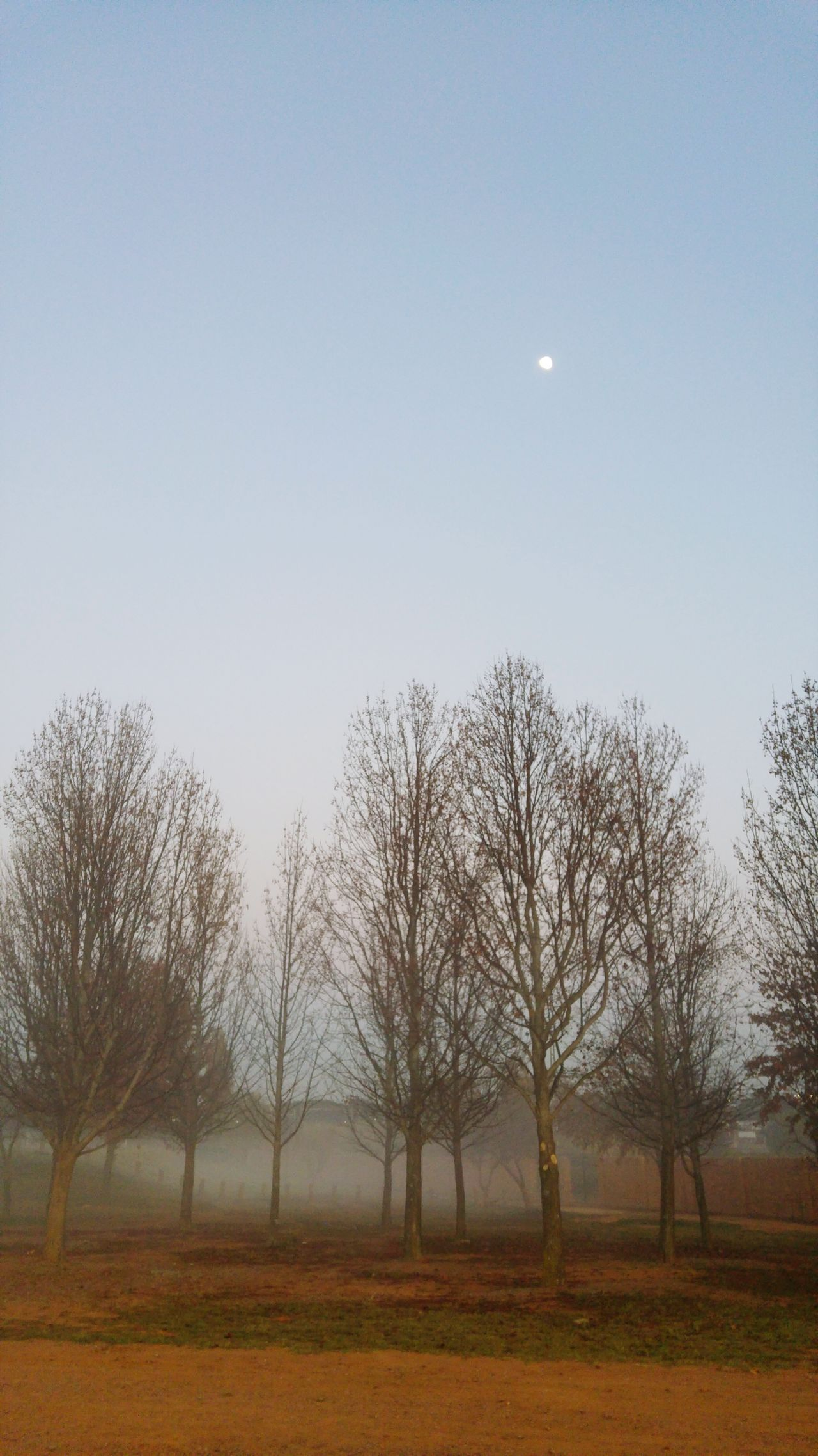 Fresh Air... Misty Morning Misty Mornings Just Before Sunrise Outdoor Photography South Africa Early Morning Walk... Early Morning Outdoors Nature Photography Trees And Nature Tree_collection  Trees Collection Moon Moonset Winter Trees Wintertime