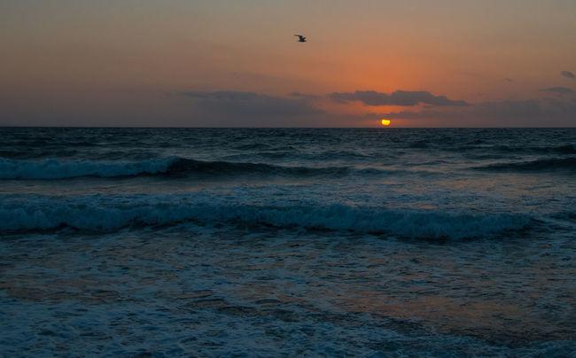Sunrise with seagull Horizon Over Water No People Ocean Orange Color Sea Seascape Sky Sunrise_Collection Sunrise_sunsets_aroundworld