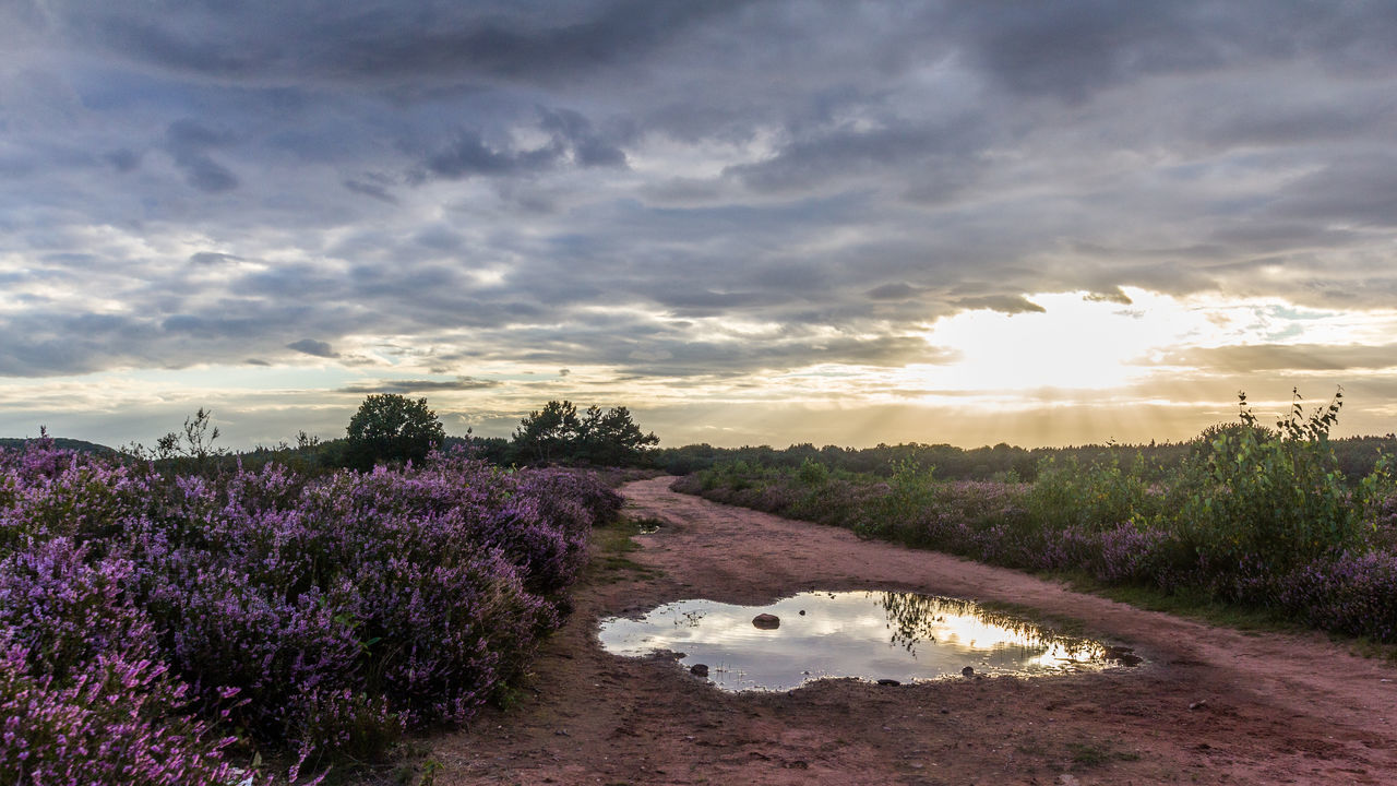 Mehlinger Heide TheWeek On EyEem TheWeekOnEyeEM Beauty In Nature Blooming Clouds Day Erica Growth Heather Heathland  Landscape Nature No People Outdoors Path In Nature Puddle Purple Reflections Scenics Sky Sun Sunset Tranquil Scene Tranquility