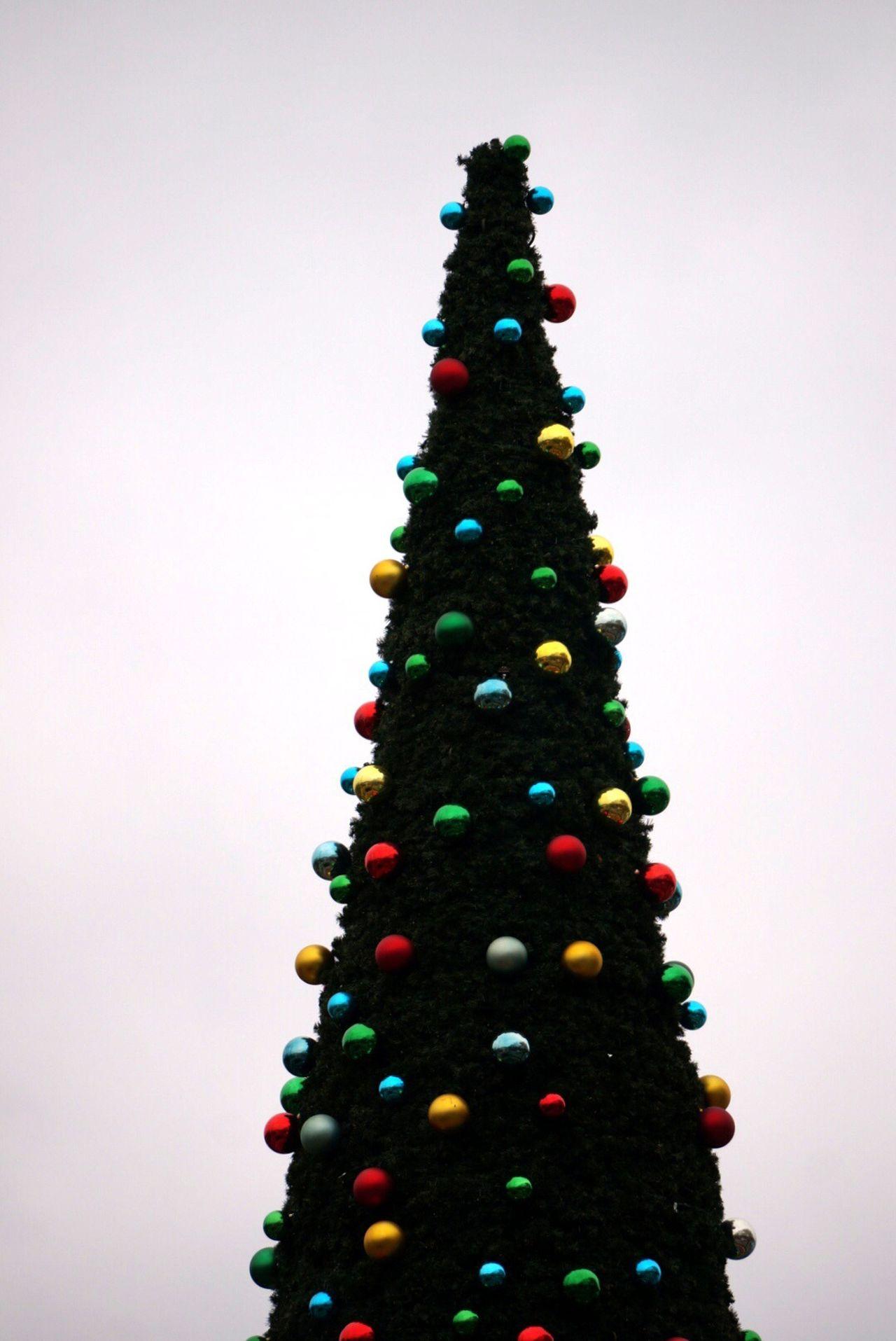 Christmas Tree Festive Season Christmas Christmastree Merry Christmas! Tivoli Trees TreePorn Hugging A Tree Christmas Decorations How You Celebrate Holidays Showcase: December