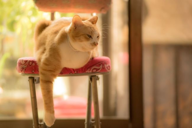 脱力💦💦💦お疲れ様でした😌 Cats Of EyeEm Cat♡ Cat Lovers Four Legs And A Tail Animal Photography EyeEm Animal Lover EyeEm Gallery Softness My Precious Kid Relaxing ふんわりPhoto ウチの姫様 ふさぁ猫